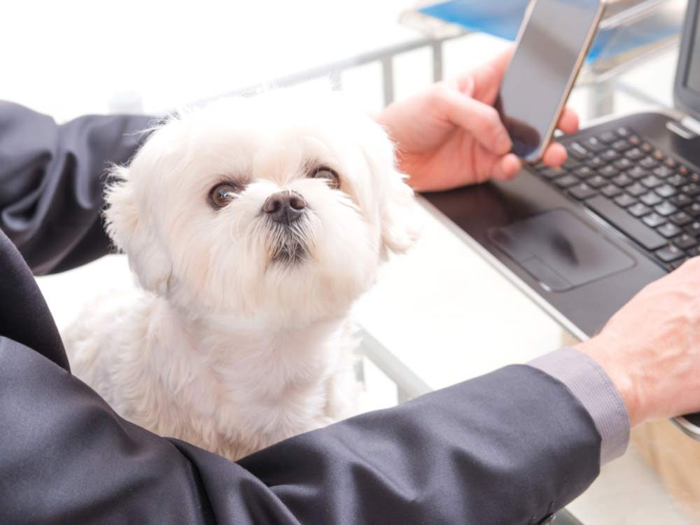 Office worker with dog