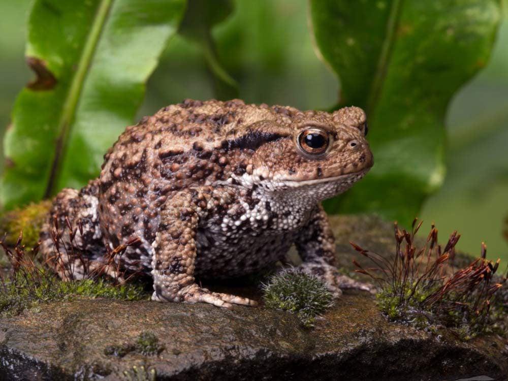 Toad in its natural habitat