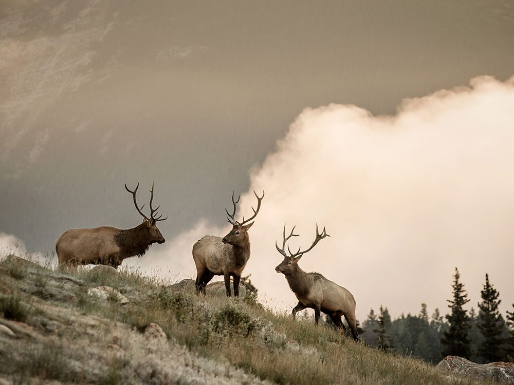 Elk sightings on Rocky Mountaineer