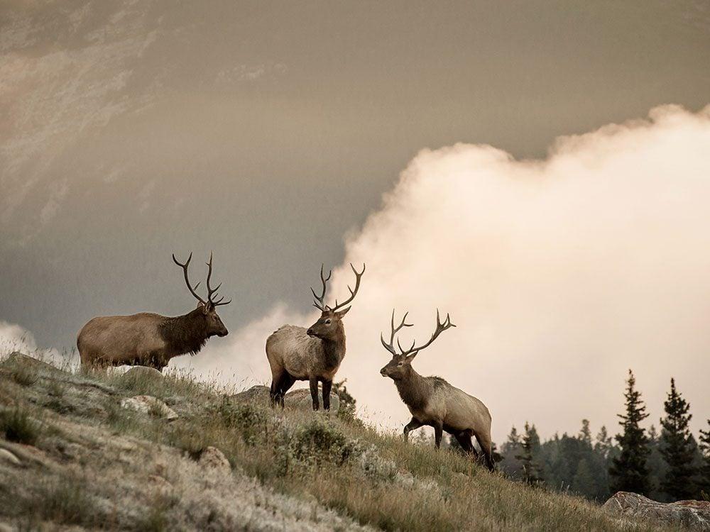 Elk sightings on Rocky Mountaineer