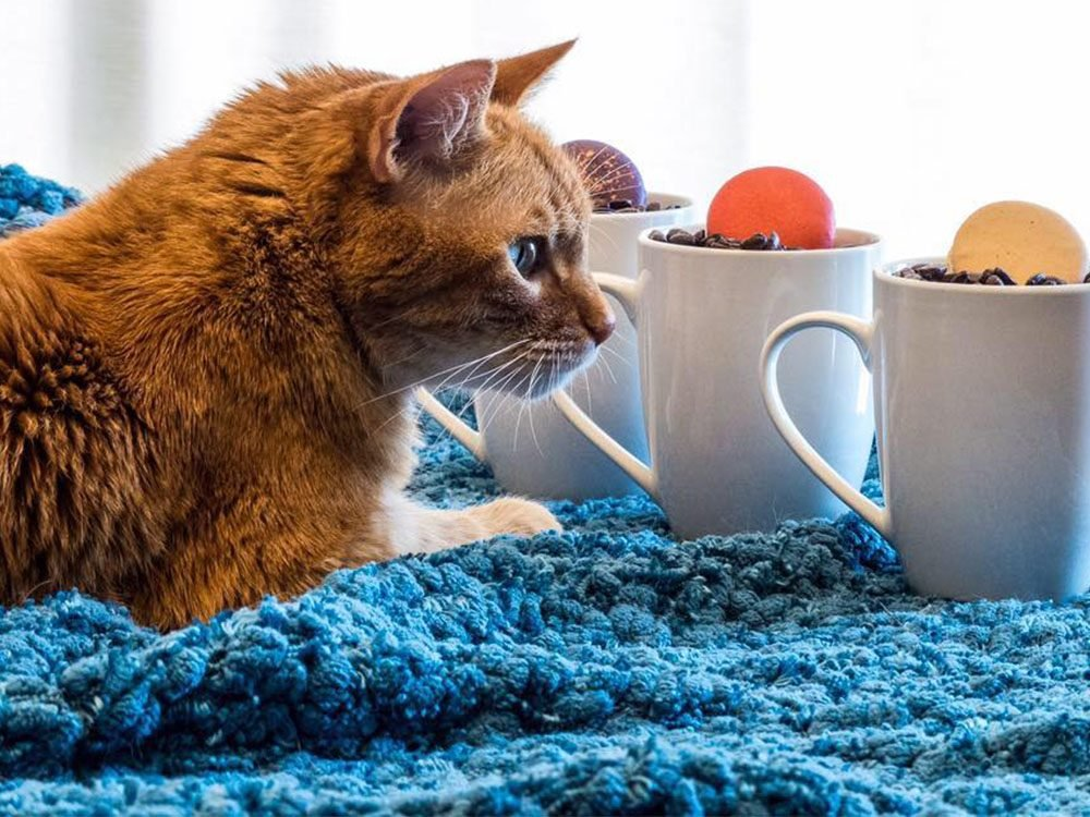 Things to do in Calgary: Regal Cat Cafe