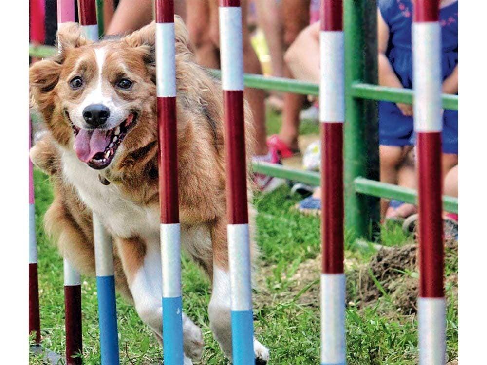 Dog show in Harrow