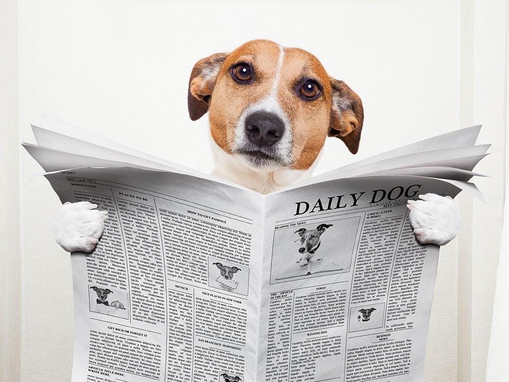Laughs at Work: Crazy headlines