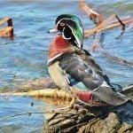 Toronto's Best-Kept Bird Watching Secrets