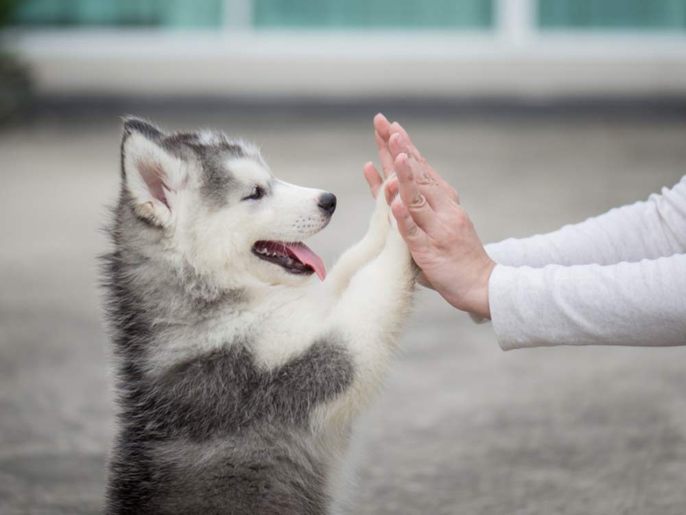 High fives with puppy
