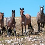 6 Places Where You Can Still Spot Majestic Wild Horses Roaming
