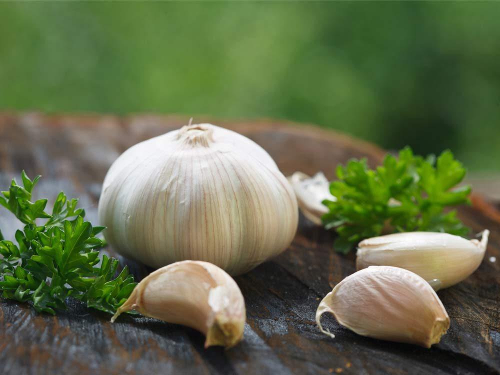 Garlic head and cloves