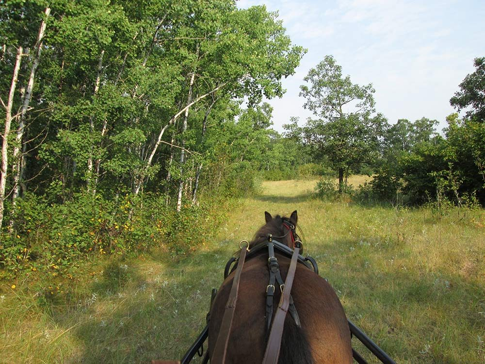 Early morning horse ride in Manitoba