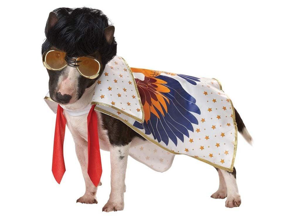 Dog dressed up as late-period Elvis Presley