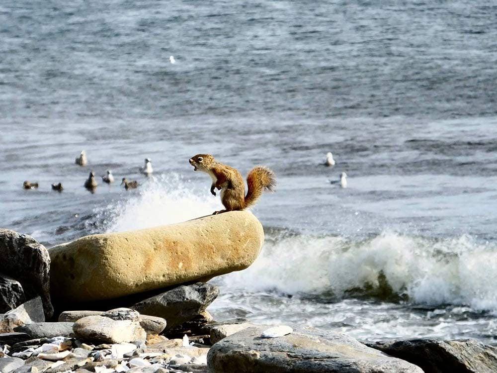 Squirrel on beach front