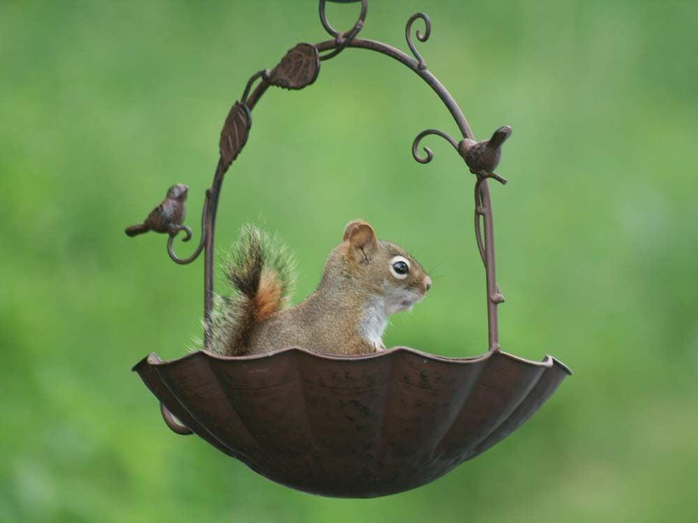 Squirrel in flower pot
