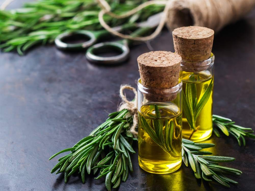 Rosemary with rosemary oil