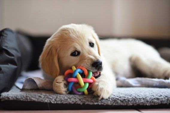 Dog with chew toy