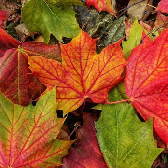 20 Breathtaking Photos of Fall From Around Canada
