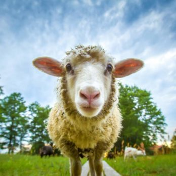 6 Famous Animals That Changed History
