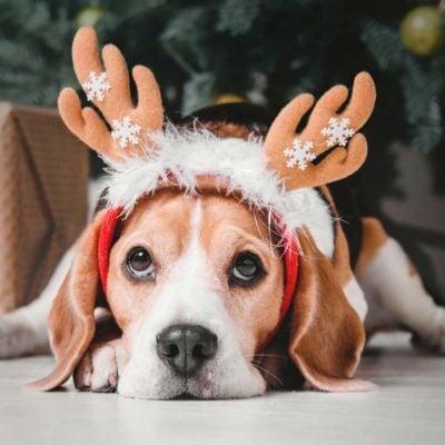 Dog sitting next to Christmas tree