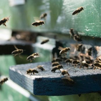 This Is Where All the Honeybees Hide During the Winter Months