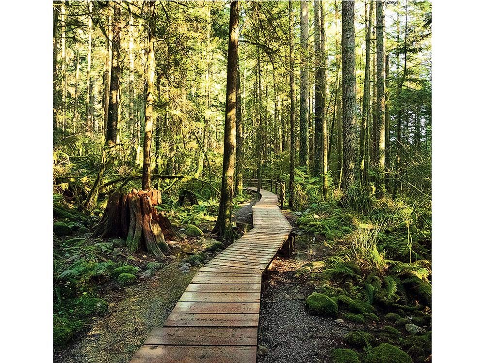 Lynn Canyon Park in North Vancouver, British Columbia