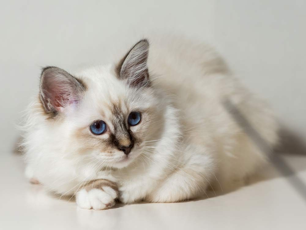 weight loss in cats symptom
