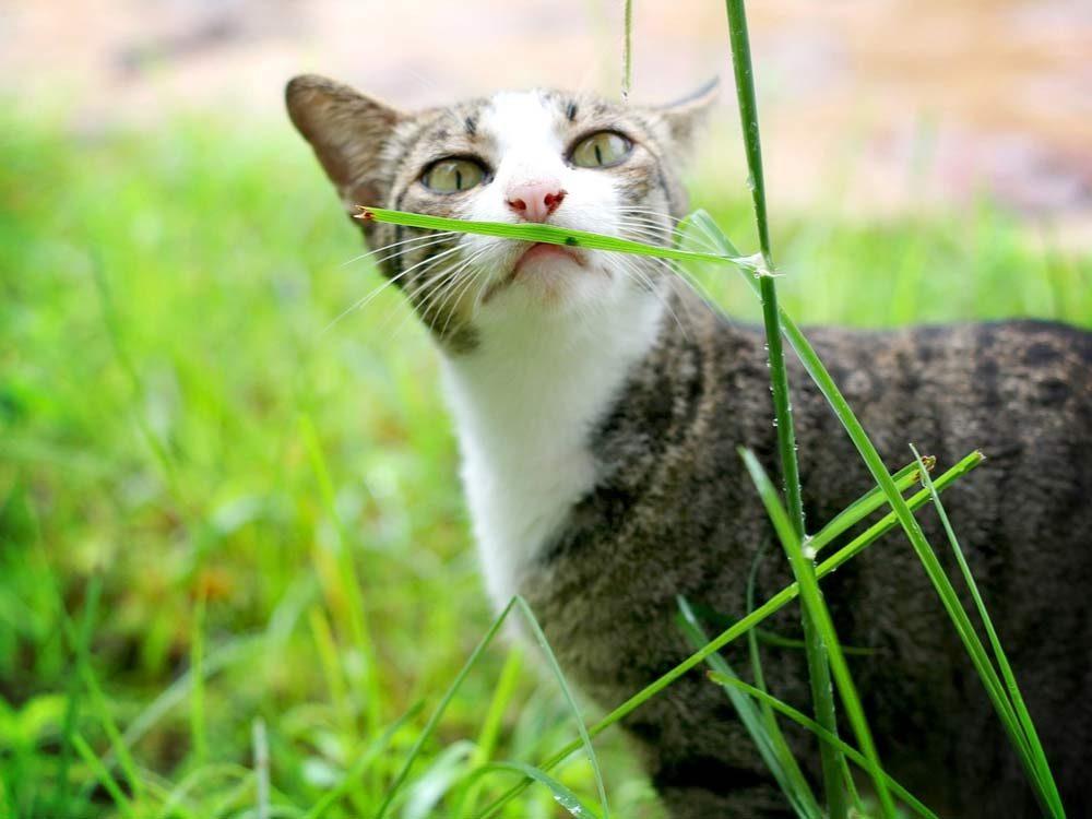 Skinny cat outdoors
