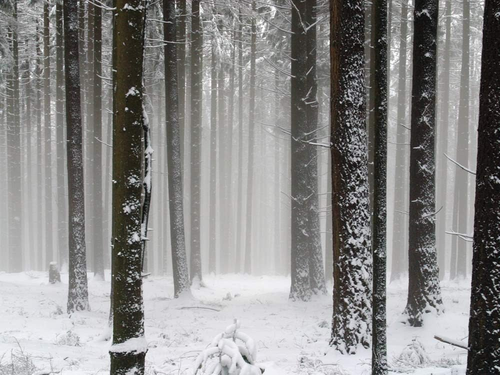 Wooded area in winter