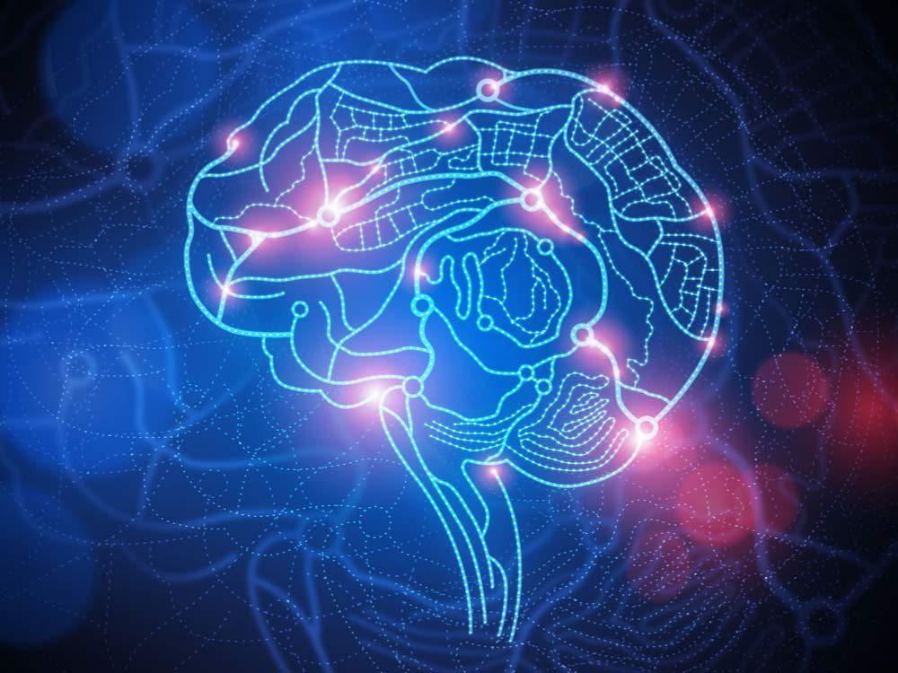 Roadmap of human brain