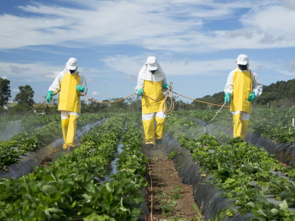 Farmers spraying pesticides