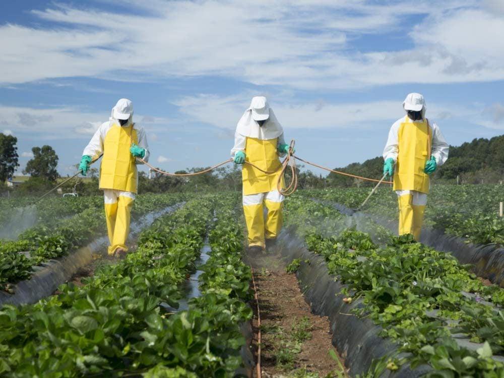 Farmers spraying pesticides