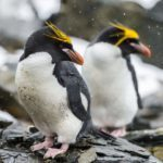 11 Monogamous Animals That Stay Together All of Their Lives
