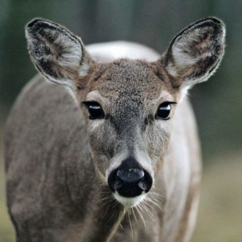 Communing with Nature: 9 Animals You Can Find in Prince Albert National Park