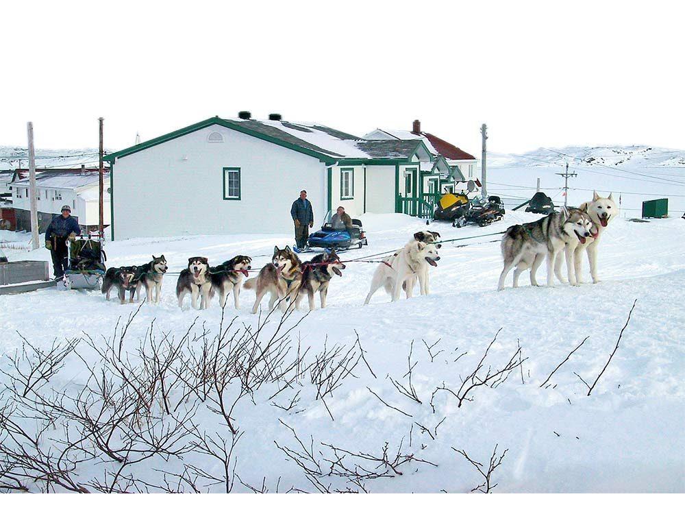 Husky dogsled team