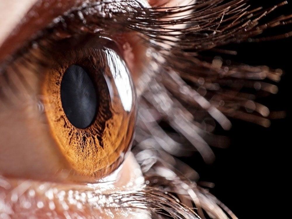 Close-up of cornea