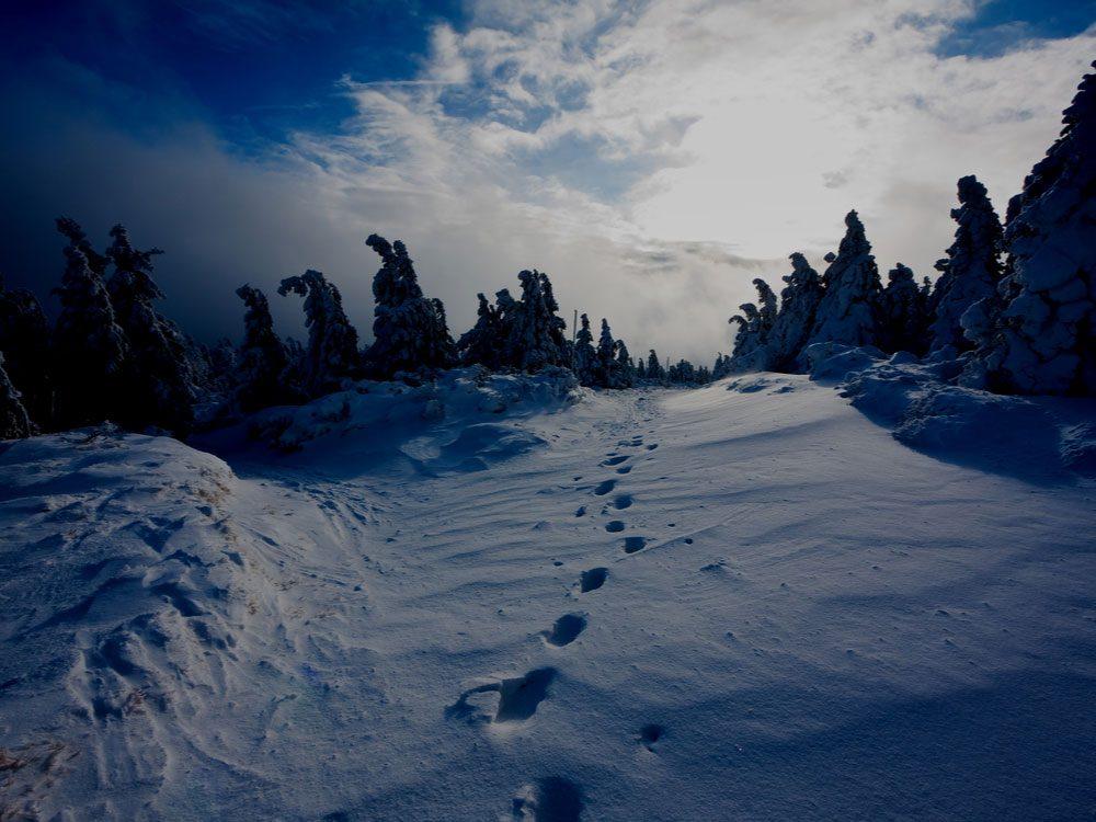 Footprints in winter forest