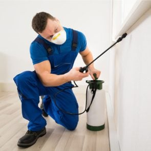 Male exterminator spraying pesticide