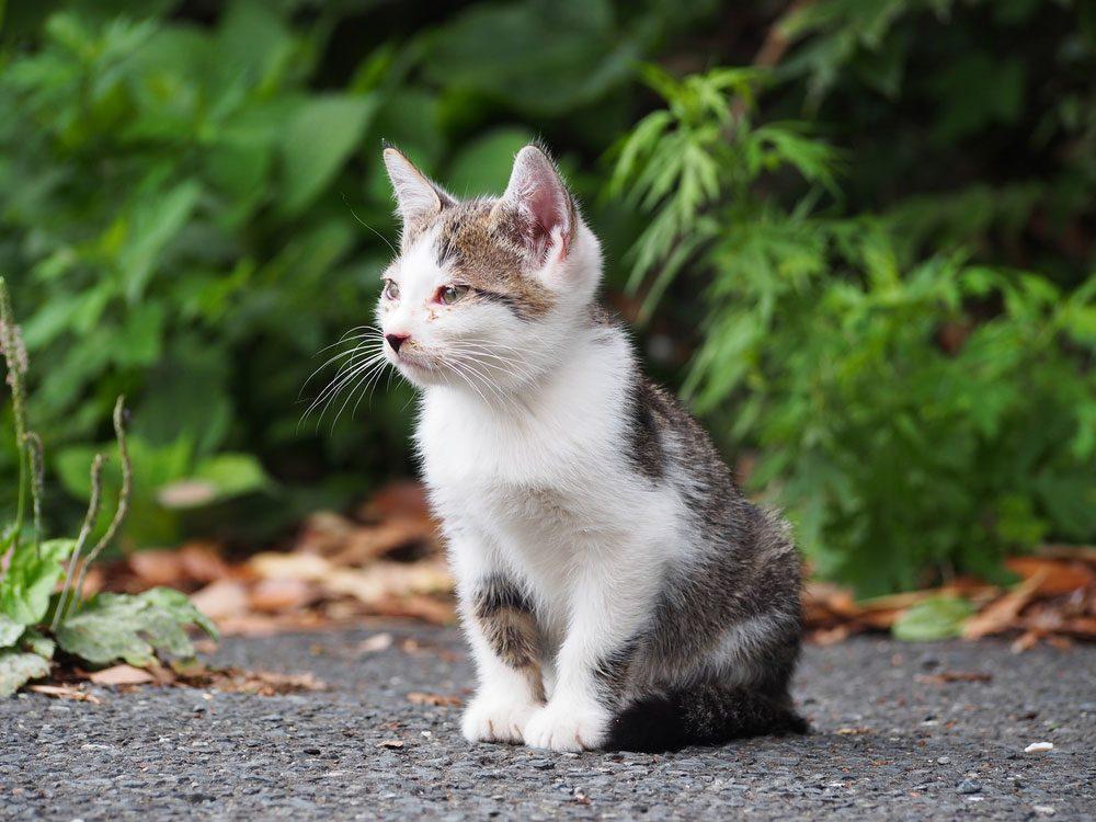Cat in Tashirojima, Japan