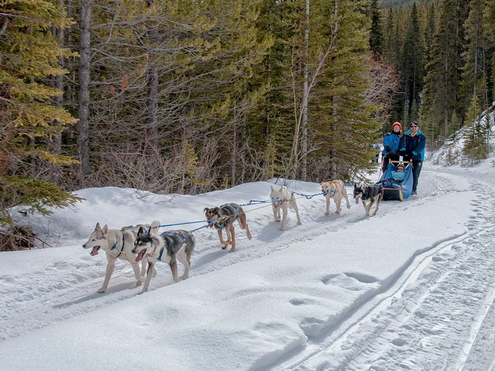 Dog sled tour