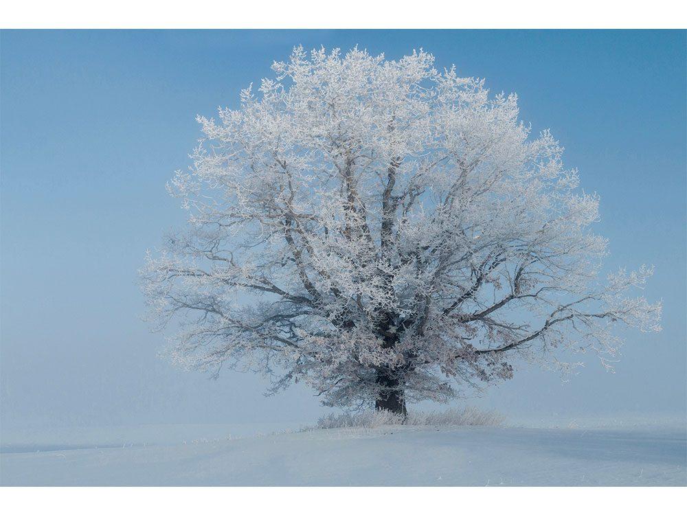 Frosty tree in winter