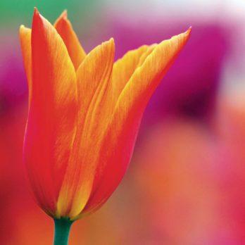 7 Secrets for Amazing Flower Photography
