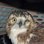 4 Things You Need to Know About Raptors, According to a Wildlife Rehabilitator