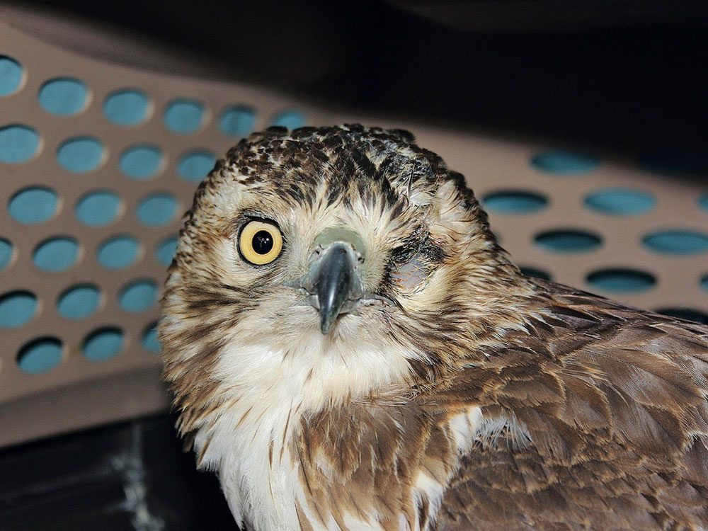 One-eyed raptor