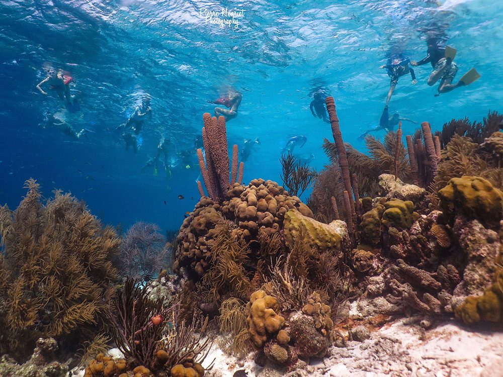 Snorkeling and coral reefs in Bonaire