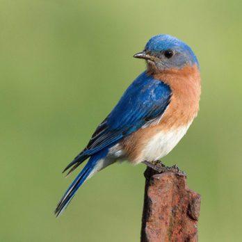 Winged Wonders: 10 Beautiful Canadian Birds Captured on Camera