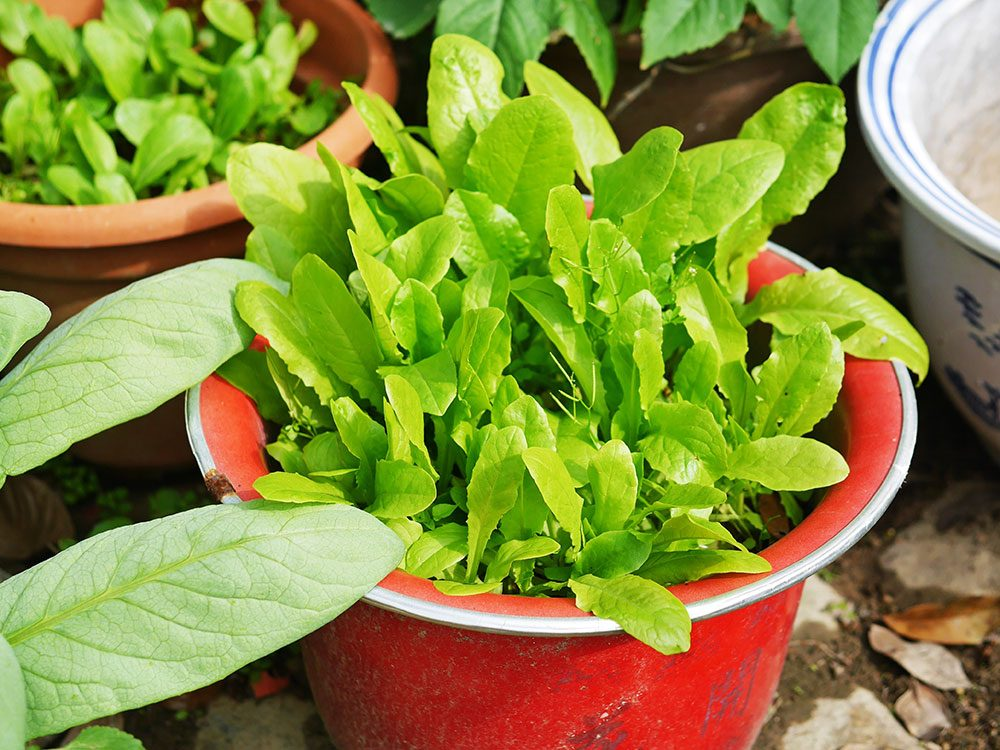 Creative containers for a vegetable garden
