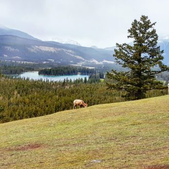 10 Shots That Will Make You Want to Pack Your Bags For Fairmont Jasper Park Lodge