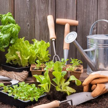 The Green Thumb's Guide: 10 Simple Tips for Growing a Vegetable Garden—Anywhere!