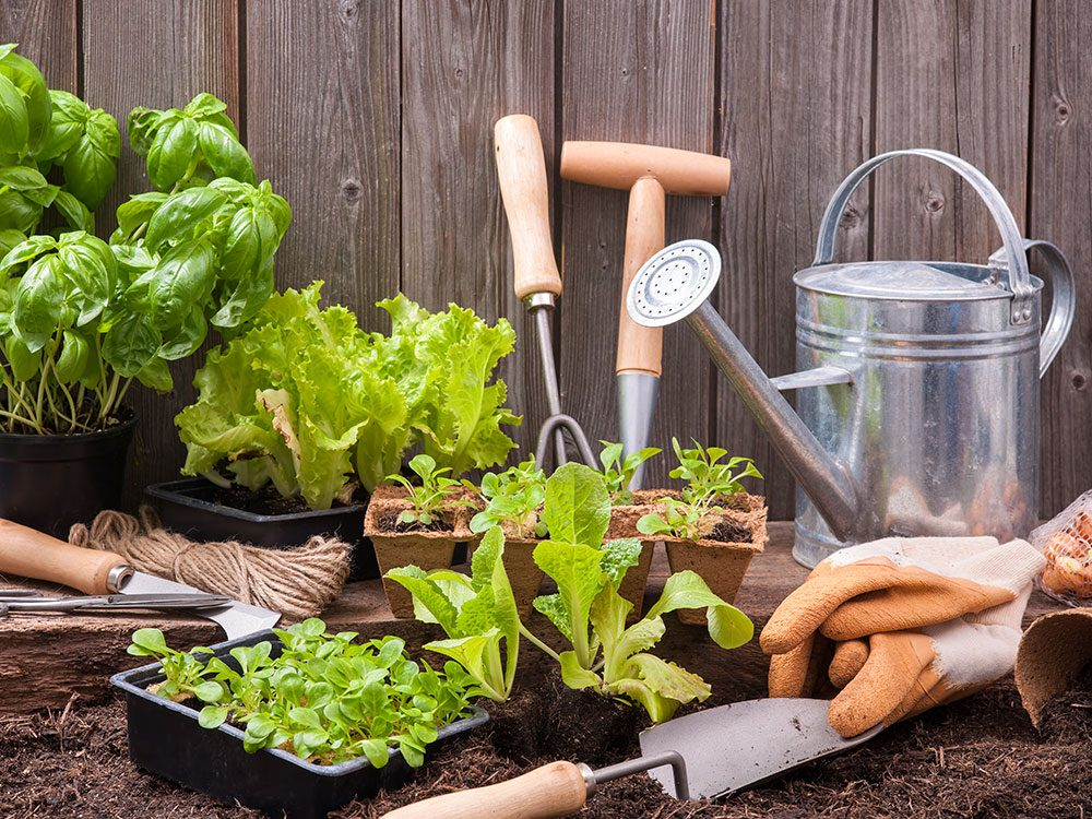 How to grow a vegetable garden anywhere