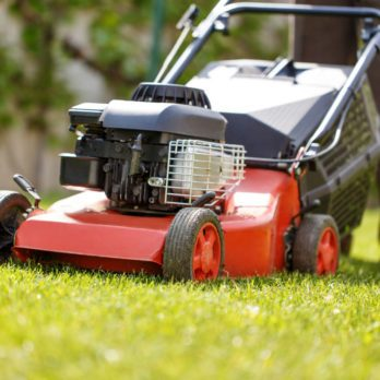 Here's Why You Shouldn't Mow Your Lawn Every Week