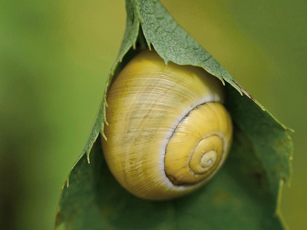 Snail captured through macro photography