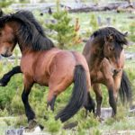 How Photographing Alberta's Wild Horses Changed My Life