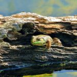 Why Point Pelee National Park is a Shutterbug's Paradise